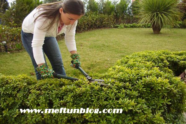 bitki bakımındaki hatalar, bitki bakımı ve hataları, bitki bakanların yaptığı hatalar