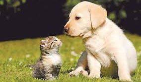 ilginç bilgiler, hayvanlar hakkında ilginç bilgiler, hayvanlar alemi ilginç bilgiler