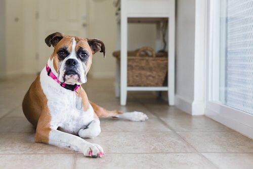 köpekler ile baş etme, köpek eğitimi, köpekler ile başa çıkma